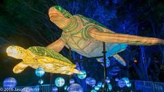 Marine Turtle (Japester68) Tags: city light sea sculpture animal festival night asian zoo marine outdoor turtle reptile walk sydney vivid australia event nsw lantern aus 3star