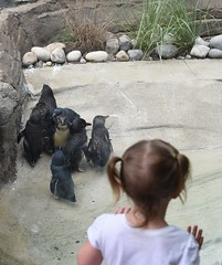 Looking At The Little Penguins (donna_0622) Tags: kids watching looking zoo louisvillezoo ky kentucky penguins small nikon d750