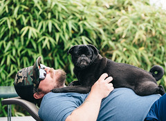 day 176 (cathy sly) Tags: dog brandon pug gus whidbey aboyandhisdog 366