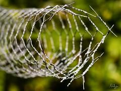 Fil en fer de ronce (Nadge) Tags: sculpture de fil vert wires barbed fond fer bramble rond barbel mtallique