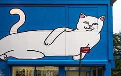 NYC-6.jpg (Patti Houston) Tags: nyc ny newyork sign cat graffiti thebigapple