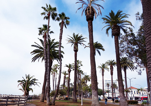 Santa Monica - Los Angeles