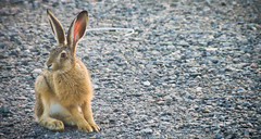 Hi there! (Simoo-) Tags: bunny nature animal animals outside outdoors photography olympus omd photoshooting em5