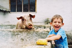 F1000025 (anabezic) Tags: analog minolta corn pop color blue yellow pig smile boy laugh funny nature animals expression greatshot child