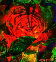 forbidden rose (Sonja Parfitt) Tags: red rose manipulated layered