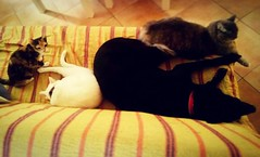 Il branco. (banned) Tags: dog cats dogs animals cane cat square vegan blackdog squareformat gatti whitecat animali bia cani canenero