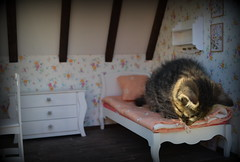 Hello Kitty (pe.kalina) Tags: cats cat miniature kitten doll furniture kitty diorama dollhouse roombox