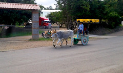 Today is the turn of the travel pics: Tope or traditional oxcard and horse parade, passing by Ro Conejo (vantcj1) Tags: animal carretera desfile buey tradicin tope carreta actividad boyero