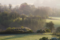 Spring foliage (woolyboy) Tags: new uk morning light misty early foliage eastsussex treescape springtime cuckmerevalley woolyboy