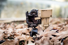 Danbo's Autumn shoot (Terence l.s.m) Tags: pa
