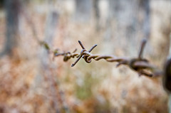 Barbed (Denzil Jennings) Tags: fence barbedwire