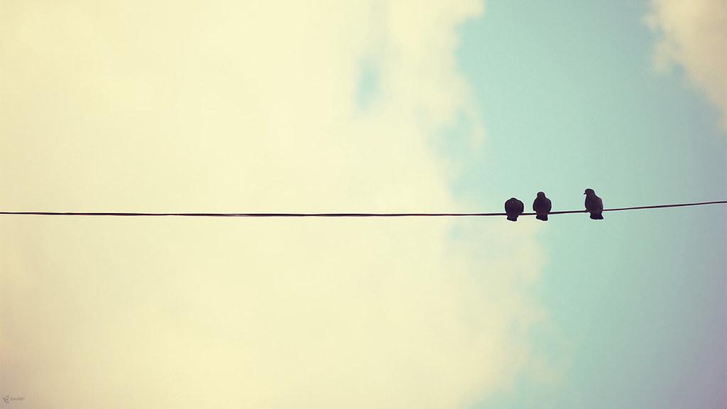 pigeons_by_zim2687-d5vqmib
