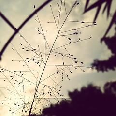 Photo (bezz123) Tags: depaul imissu instagram ifttt guthai