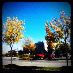 Day 272 - three yellow leaf trees (Sharon's Shotz) Tags: autumn trees ontario canada fall parkinglot kingston iphone day272 day272365 3652013 365the2013edition 3652013edition reflexapp 29sep13 29sept2013