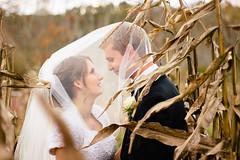 Jess + Matt (jessicalshoe) Tags: autumn wedding love groom bride corn couple veil young newengland marriage romance lovers