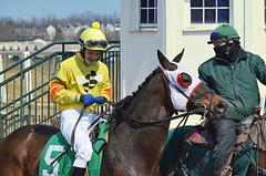 "2013-03-27 (69) r5 Richard Monterrey on #5 Montana Storm (JLeeFleenor) Tags: photos photography marylandracing md marylandhorseracing laurelpark jockey جُوكِي ""赛马骑师"" jinete ""競馬騎手"" dżokej jocheu คนขี่ม้าแข่ง jóquei žokej kilparatsastaja rennreiter fantino ""경마 기수"" жокей jokey người horses thoroughbreds equine equestrian cheval cavalo cavallo cavall caballo pferd paard perd hevonen hest hestur cal kon konj beygir capall ceffyl cuddy yarraman faras alogo soos kuda uma pfeerd koin حصان кон 马 häst άλογο סוס घोड़ा 馬 koń лошадь maryland"