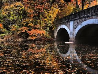 Autumn Portals