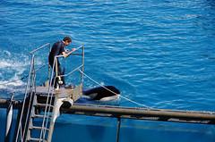 IMGP1054 (rum_den_1986) Tags: dolphin orca dauphin antibes marineland orque