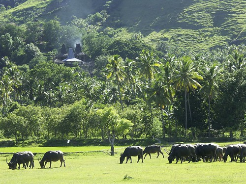 Sumba, village near Waikabubak