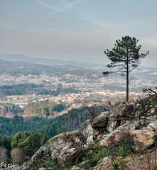 Solitario (Perurena) Tags: sky naturaleza tree portugal arbol paisaje cielo pino rocas sanfins
