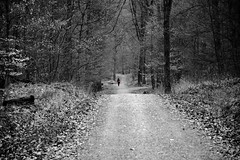 The Trail (RanadipRoy) Tags: road wood trip morning travel trees red vacation blackandwhite woman plants sunlight holiday plant color colour tree nature leaves trekking trek germany way bag landscape person grey daylight woods solitude experimental thought day alone tour shadows view forrest earth path walk exploring hill perspective experiment palace pebbles tourist luggage traveller explore soil trail human journey jungle pensive lonely moment ponder visitors visitor schloss footpath stroll colorsplash siedlung coloraccent gerlingen schlosssolitude colorpop