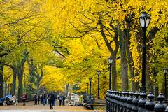 Central Park, New York (Wing Tam Photography) Tags: newyorkcity autumn trees newyork fallcolor streetlamp centralpark fallfoliage newyorkphotography