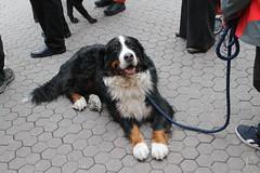 dogs croatia zagreb jelacicsquare