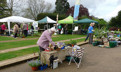 Setting up the stalls at Bean Pole day (karenblakeman) Tags: uk april caversham 2014 cavershamcourtgarden beanpoleday