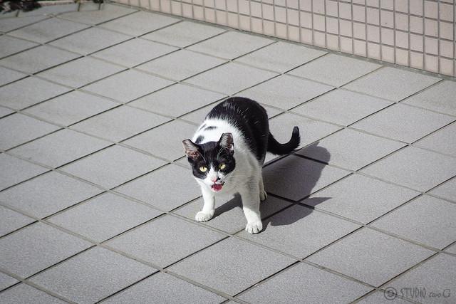 Today's Cat@2014-05-10