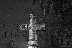 Estampon_Croix de mission (lucbarre) Tags: lagune pins arbre croix ruines hameau landes losse estampon