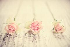 Three sweet roses (RoCafe) Tags: pink roses stilllife soft bodegn pastels tabletop textured nikkor50mmf14 nikond600