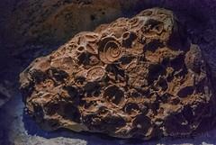 DSC_7141 (andrey.salikov) Tags: january 2015 природа музей жж nikond60 латвия рига прибалтика 180550mmf3556