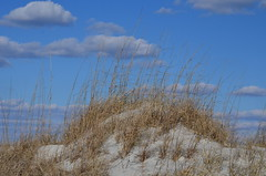 Beach Dune (pjpink) Tags: winter beach coast sand dunes january northcarolina carolina grasses wrightsvillebeach 2015 blowingsand pjpink