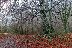 Desnuda y mojada ..... (PITUSA 2) Tags: naturaleza rio ruta hojas lluvia paisaje otoño sendero senda haya navarra baquedano mojada urederra comunidadforal pitusa2 elsabustomagdalena