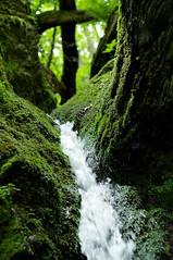 schnelles Wasser (Lukas Litz Obb) Tags: green nature forest landscape deutschland waterfall wasserfall sommer natur bach grn landschaft wald moos boppard rheinlandpfalz ehrbachklamm