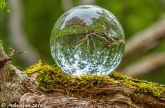 Woods 1 (crusha5050) Tags: woodland tree crystalball crystal ball reflection bokeh depthoffield greatfen holme
