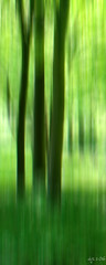 Trees (Wipeout Dave) Tags: trees woodland spring nationaltrust icm wipeoutdave rievaulxtemplesandterraces canoneos1100d davidsnowdonphotography djs2016