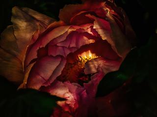 Freitag der 13. in der hintersten Ecke eines fremden Gartens  •  Friday 13th, shining from the rearwarded edge of a secret garden