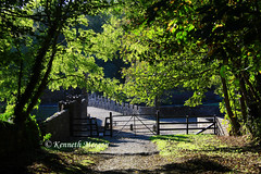 Tintern Abbey Wood (Ken Meegan) Tags: ireland tinternabbey cowexford saltmills tinternabbeywood 11102014