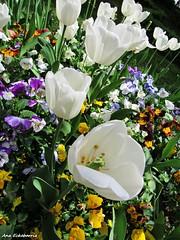 Un canto a la amistad....Explore (kirru11) Tags: flores amigos amistad canonpowershot alegra kirru11 anaechebarria