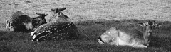bambigang (Feroswelt) Tags: nature ngc gang nat chillin national bambi geo geographic eyecatcher feroswelt