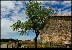 160507-7977-XM1.jpg (hopeless128) Tags: sky france building tree clouds eurotrip fr 2016 bioussac aquitainelimousinpoitoucharentes aquitainelimousinpoitoucharen