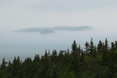 Sea Fog (detail) (deanspic) Tags: mist fog newfoundland coast hills summit spruce eastcoast capespear seafog borealforest g3x nfld2016