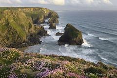 Bedruthan Steps (Phil Bloxham) Tags: ocean sea cliff seascape flower rock coast flora cornwall shore serene nationaltrust clifftop