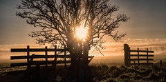 It's a new day (Jorden Esser) Tags: sunlight mist tree netherlands silhouette fog sunrise fence delft rays grassland sundawn middendelfland fencefriday