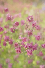 In Munich's Westpark (suzanne~) Tags: flower floral outdoor plant botanical blossom bloom topazimpression painterly velvet56 texture
