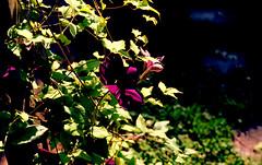 mamiya m645 (bluebird87) Tags: flowers mamiya film kodak epson 100 v600 ektar c41 m645 dx0