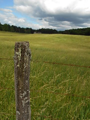 Old fence by field (jakes-photos) Tags: lichen field cloud clouds tree grass wind photo