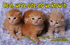 Yeah, we're cute and we know it. (youtube.com/utahactor) Tags: red orange pet cute face animal yellow cat ginger blog eyes kitten feline chat cinnamon adorable kitty ears kittens whiskers meme gato website precious tiny kitties gata hd paws videos 4k chatons youtube friendsofzeusandphoebe gingerkittiesfour