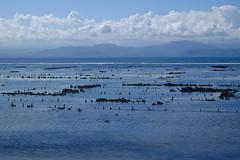 (Valerio Soncini) Tags: blue sea bali seascape seaweed indonesia id seetang indonesien lembongan nusalembongan nusapenida seegras sooc